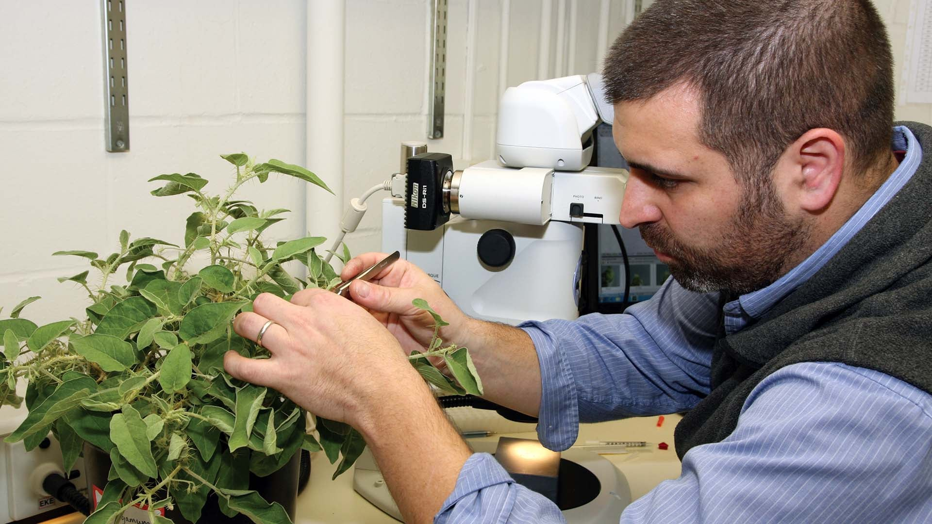 photo of Zachary Lippman working with plants