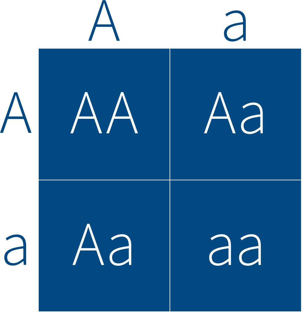 graphic of Punnett square