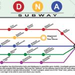 DNA Subway hero image