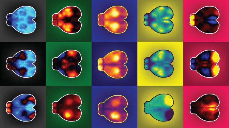 image of mice brains