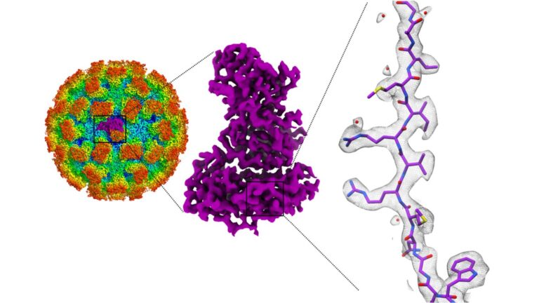 image of norovirus structure