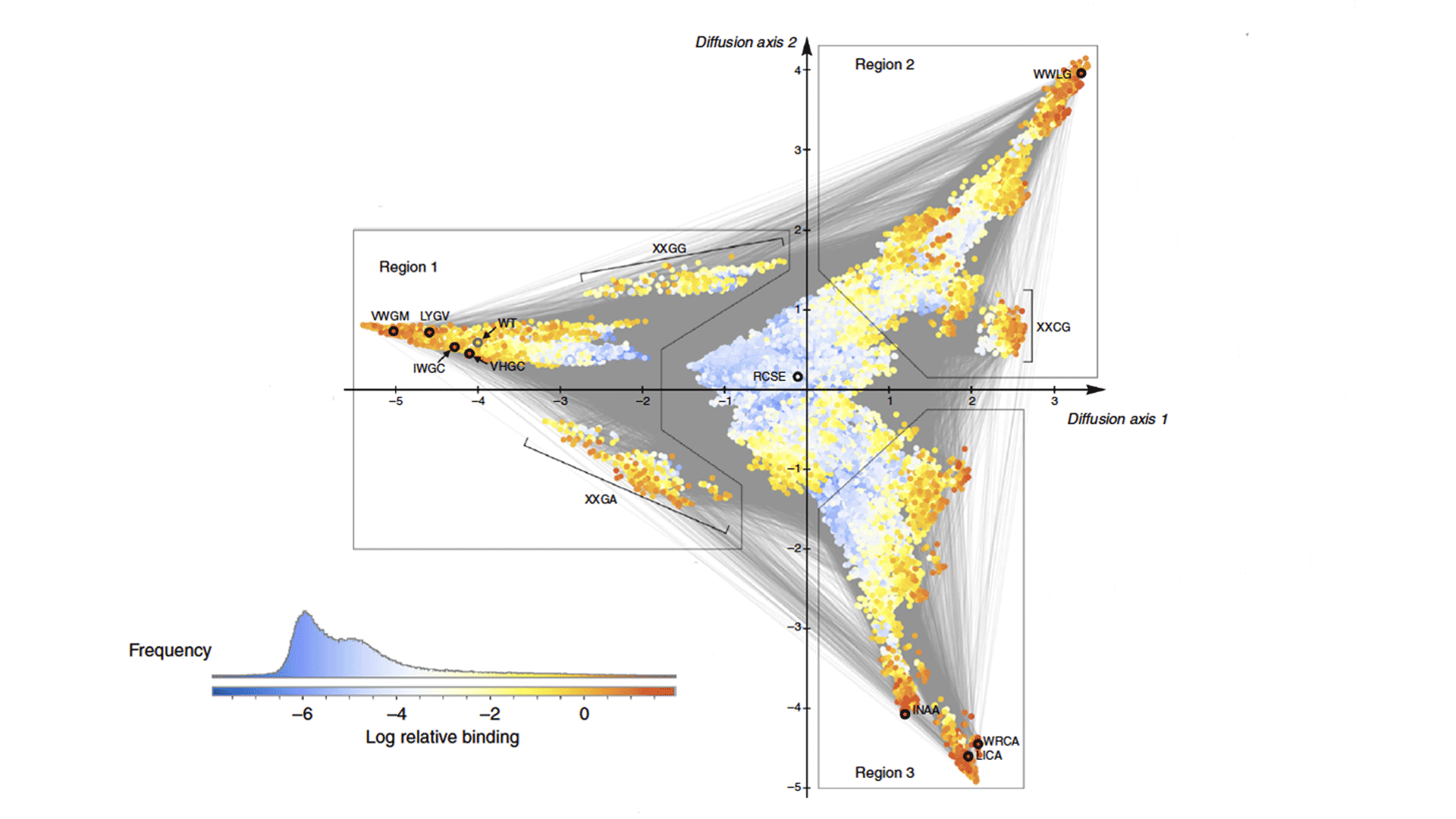 graphic of bacterial protein visualization represented as a triangular graph