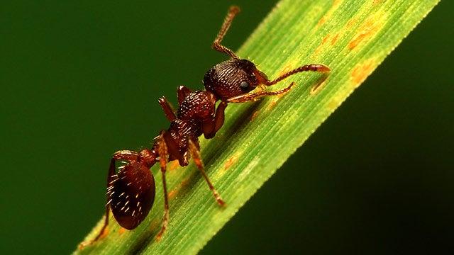 Amazing ants hero image