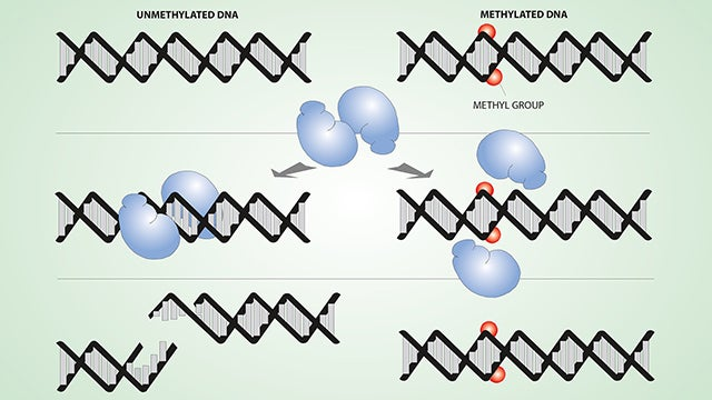 DNA methylation hero image