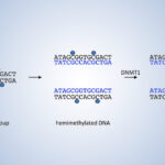 DNA Methyltransferases and DNA Methylation hero image