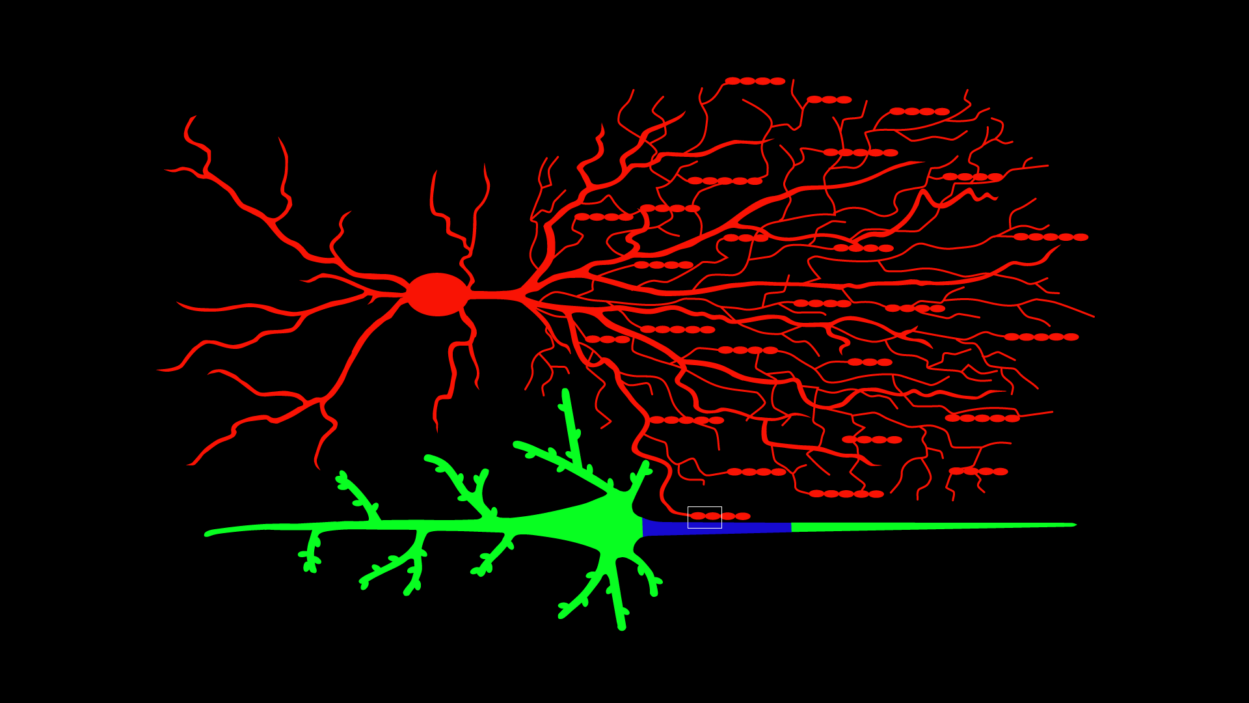 Illustration of Chandelier and pyramidal neuron