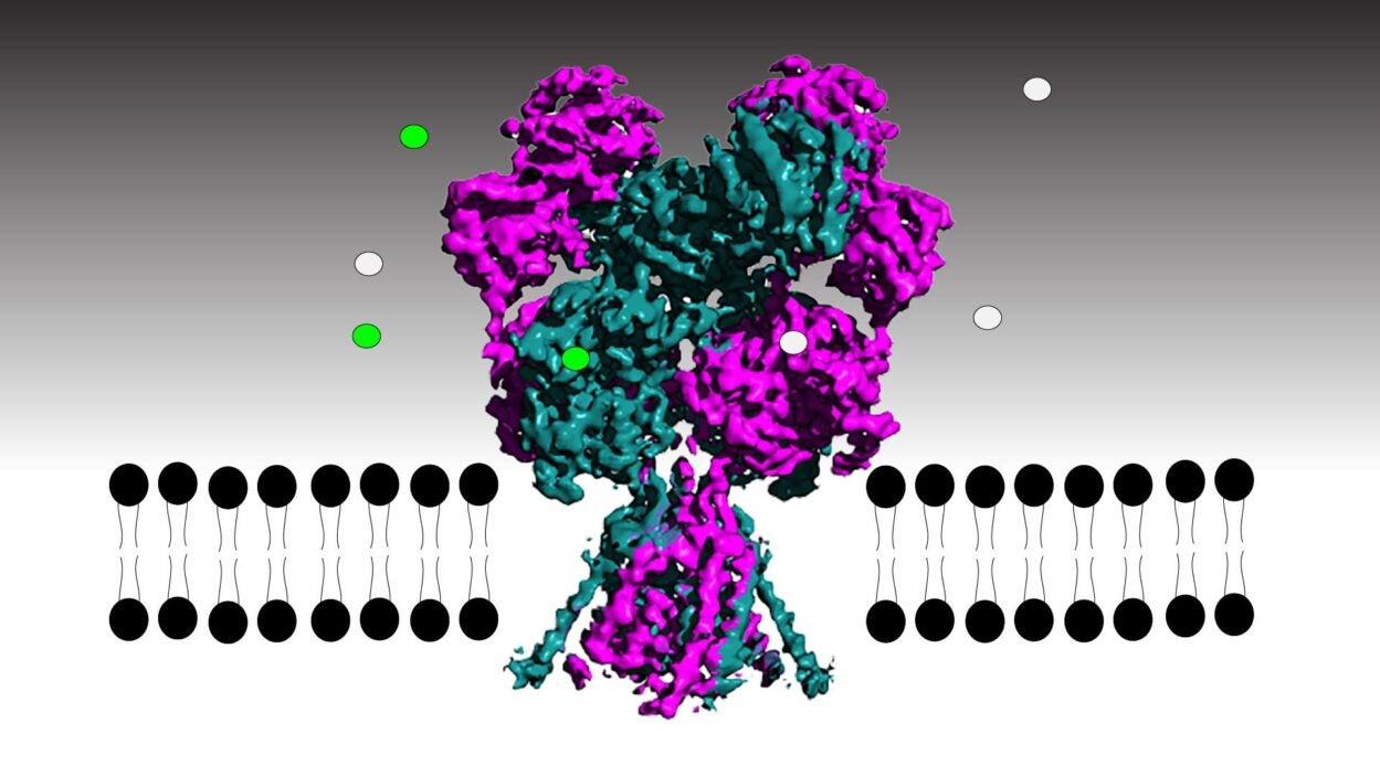 illustration of NMDA receptor