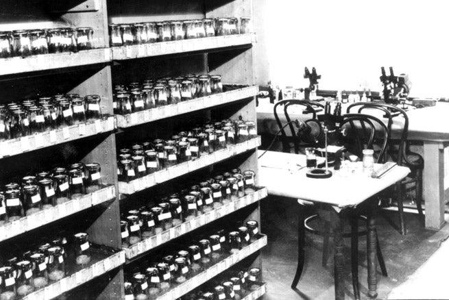 photo of Drosophila lab in Library