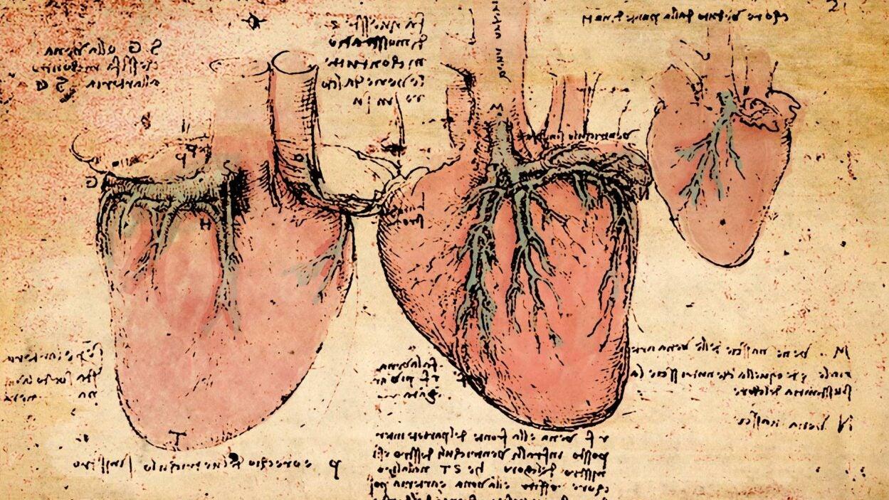 image of Leonardo da Vinci hearts