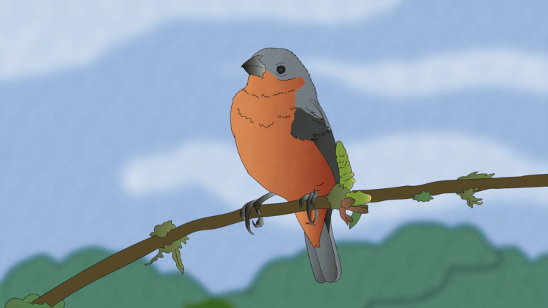 illustration of a South American capuchino seedeater