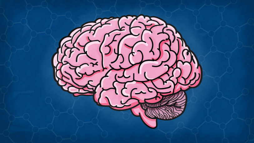 illustration of a human brain in profile