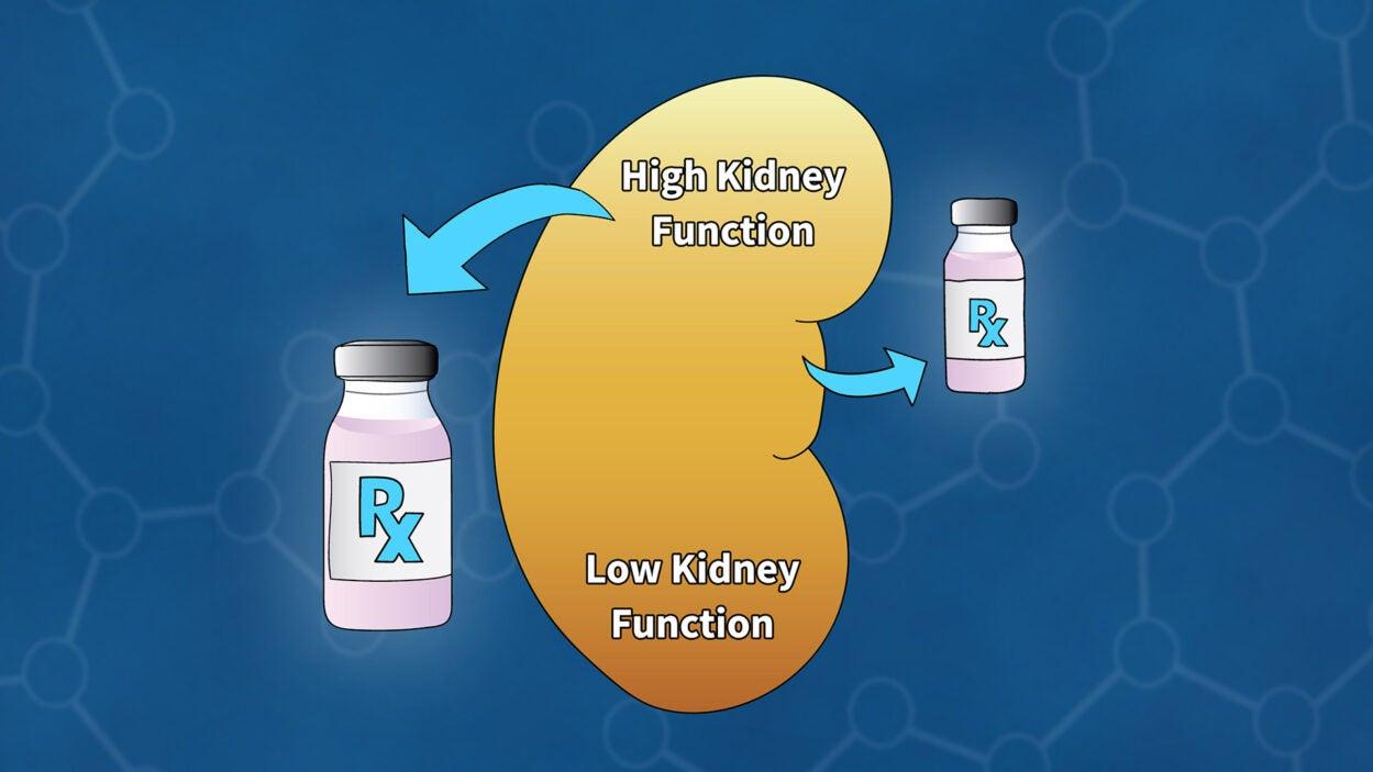 illustration of a kidney and drug bottles