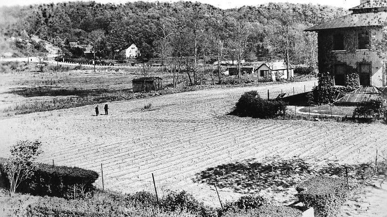 historic photo of Cold Spring Harbor Laboratory corn field