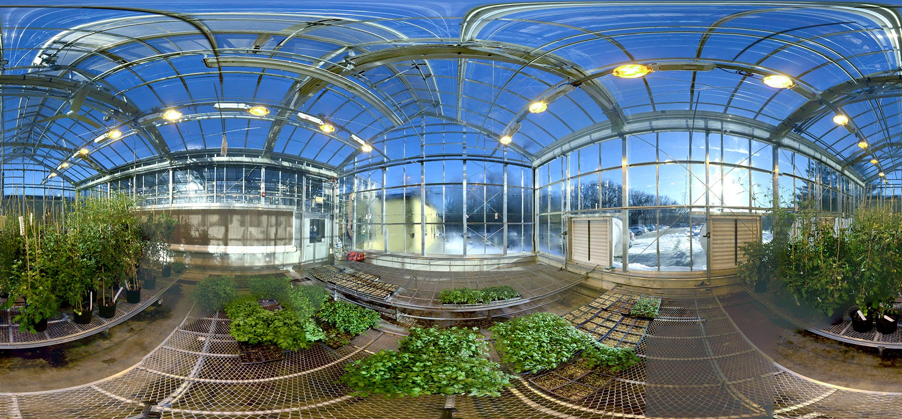 panoramic photo of a CSHL greenhouse