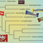 Phylogenetic tree diagram with candy bars