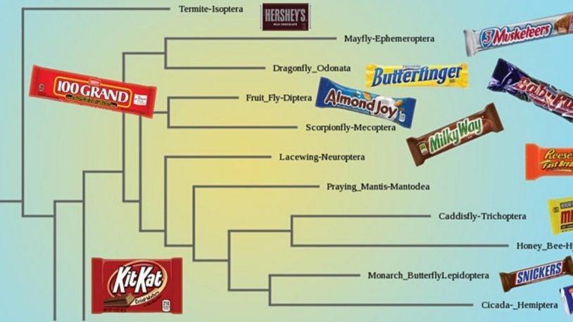 Saturday DNA! Virtual Lab: Candy Bar Phylogenetics (Age 10-14)