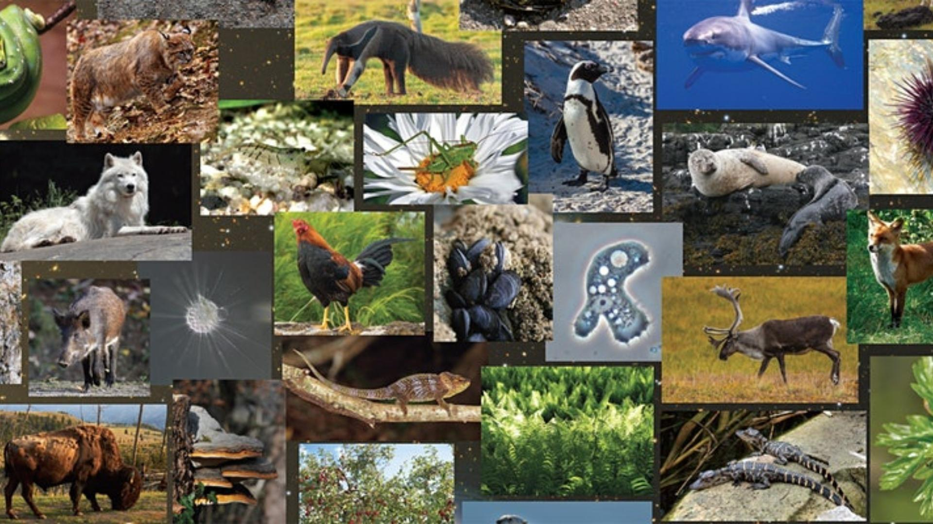 Photographs of many different living things representing the diversity of life