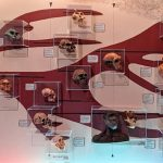 photo of various hominid skulls on a display