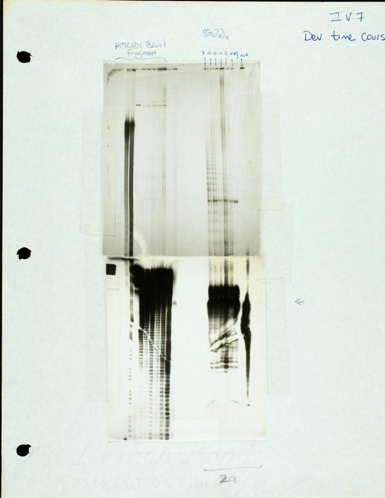 scan of Carol Greiders lab notebook with telomerase proteins