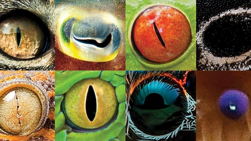Saturday DNA! Virtual Lab: EYE-VOLUTION (Age 10-14)