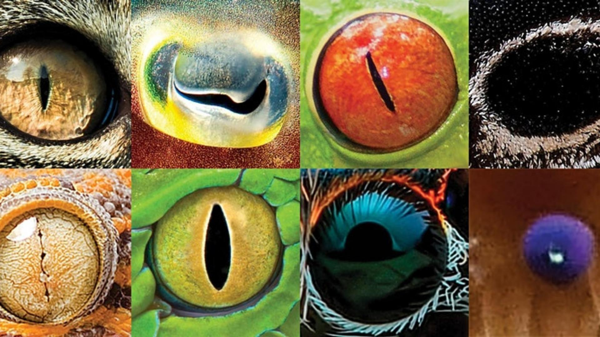 Photo collage of eight different animal eyes