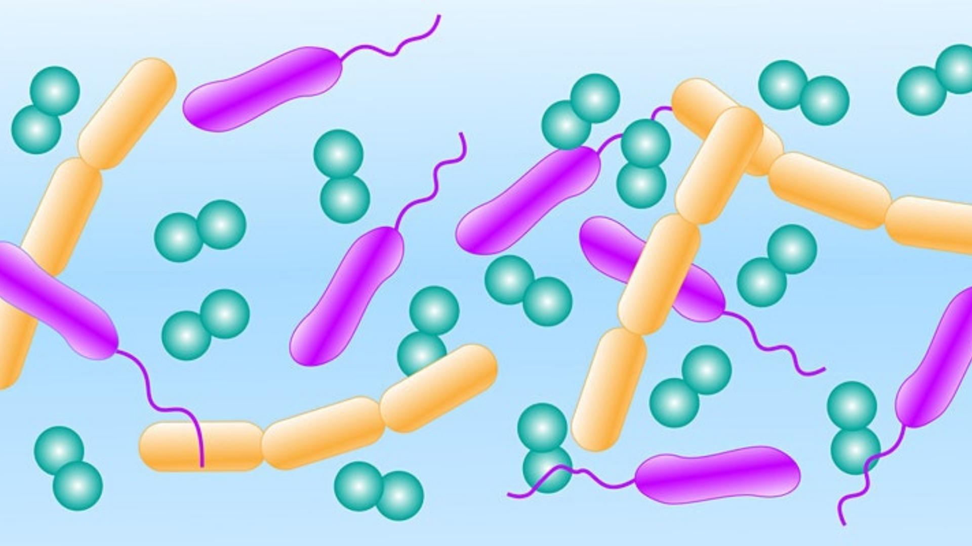 diagram of microbes