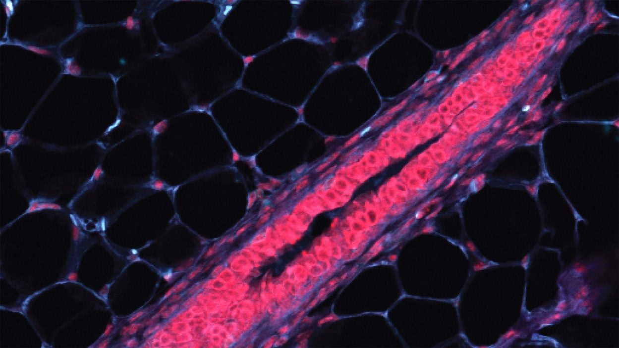 photo of mouse breast cells