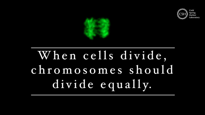 image of cell dividing