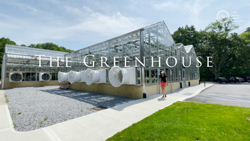 photo of the outside of the CSHL greenhouse
