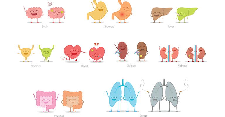 illustration of human organs as characters